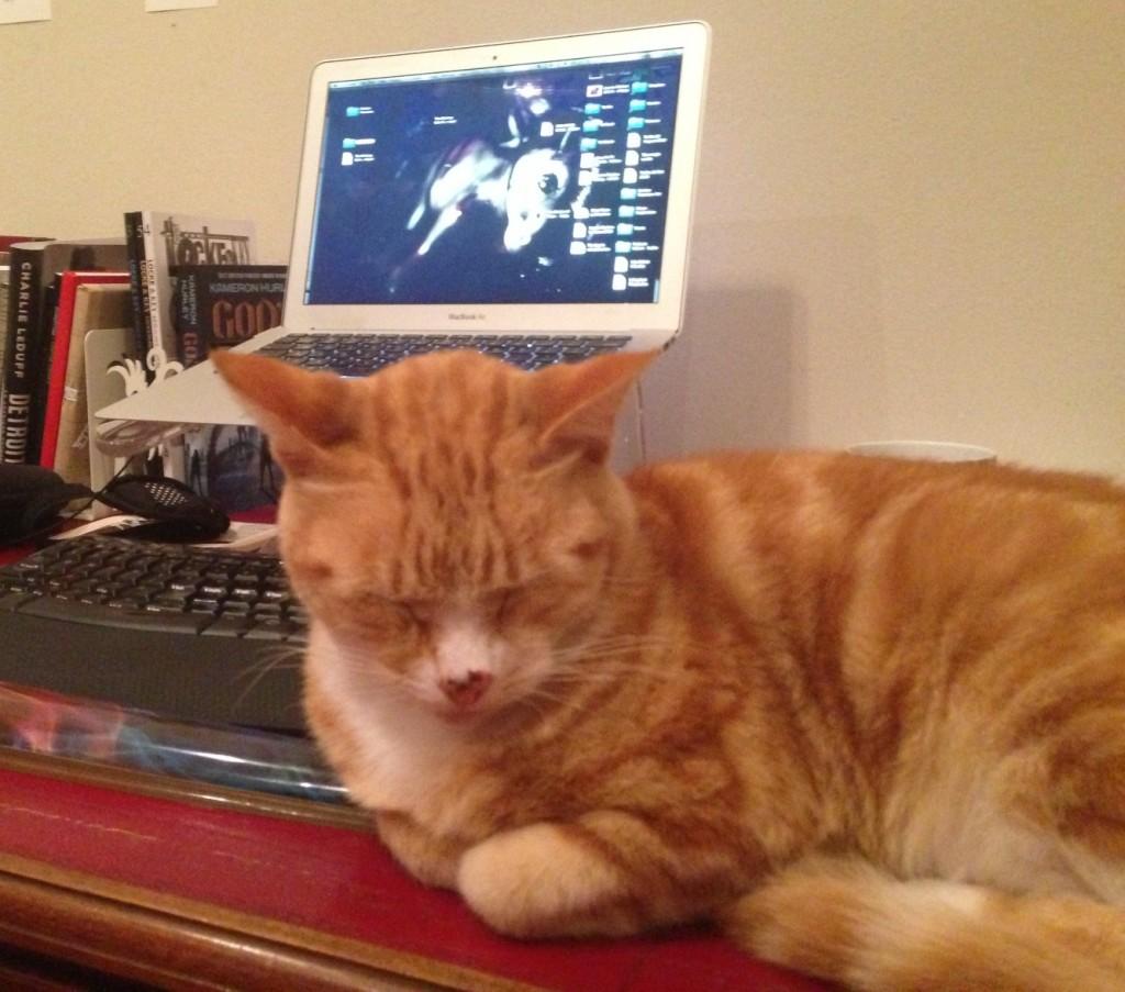 Desk cat giveaway